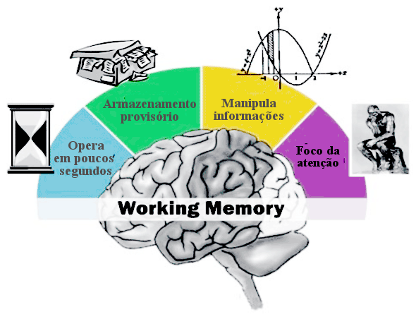 soucrianca working memory